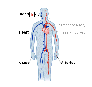 Blood, Heart and Circulation