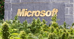 Why Microsoft wants in on the marijuana business and why the DEA won't stop it