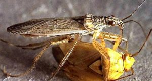 TN's new mantra: kill pests with insects
